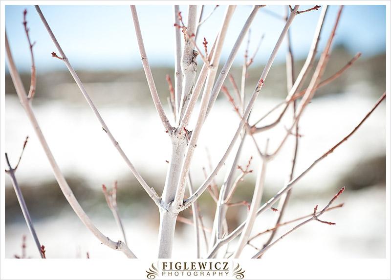 FiglewiczPhotography-Arizona-0022.jpg