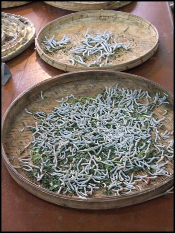 silk worms in basket