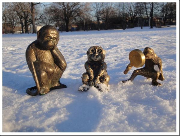 Snow-Monkeys-04