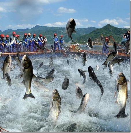 Flying Fish - Amaze Pics (2)