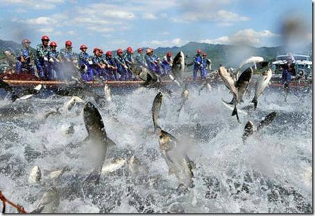 Flying Fish - Amaze Pics (7)