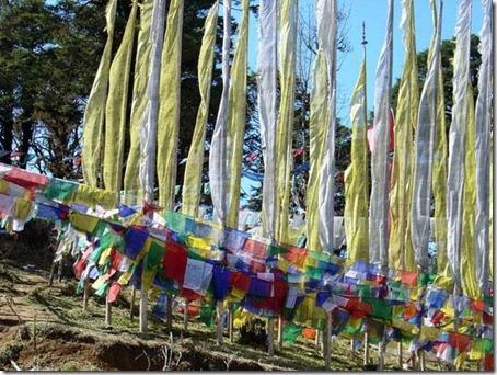 Bhutan Beauty  6