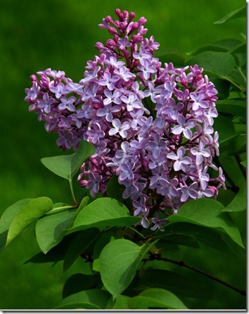 Amazing_Purple_Flowers_2