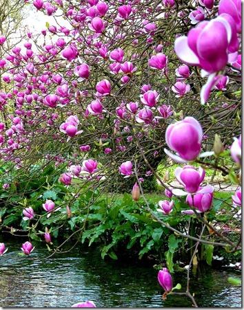 Amazing_Purple_Flowers_6