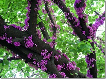 Amazing_Purple_Flowers_7