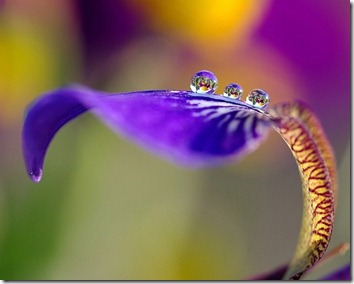 Amazing_Purple_Flowers_11
