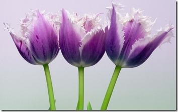Amazing_Purple_Flowers_14