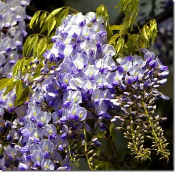 Amazing_Purple_Flowers_17