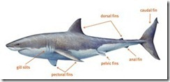 Top 10 Facts About Sharks
