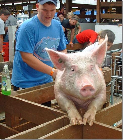 Fair Hog Show 005