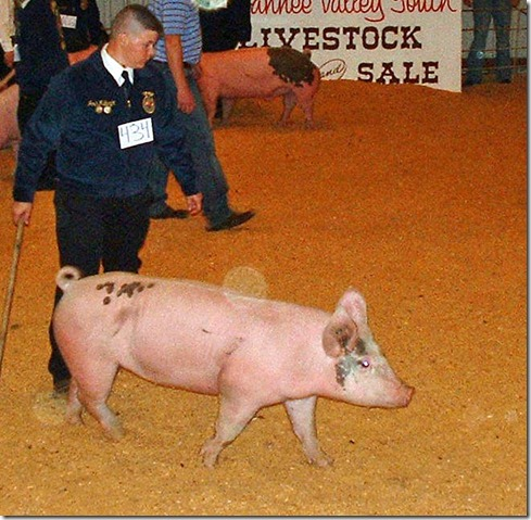 Fair Hog Show 057