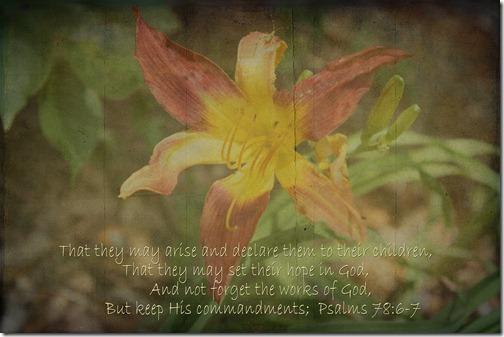 Lily 012 copy