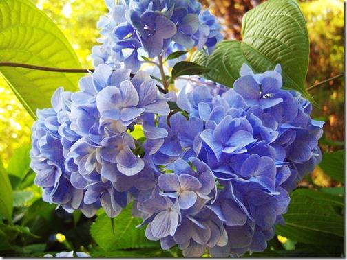 Flowers 021