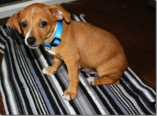 ebay puppy 024