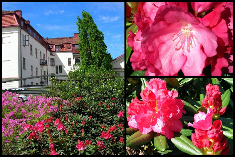 2010 06 01_rhododendron_collage1