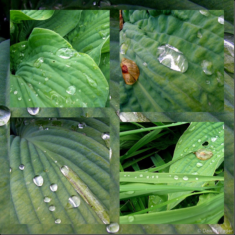 2010 06 19 waterdrops collage