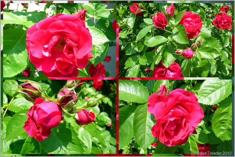 2010 07 Flowers