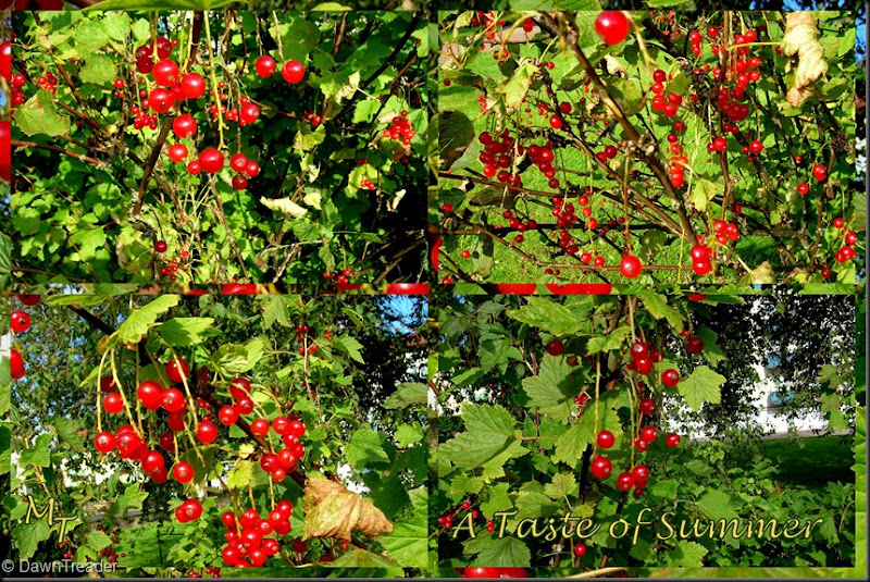 2010 08 01 Red Currants 3