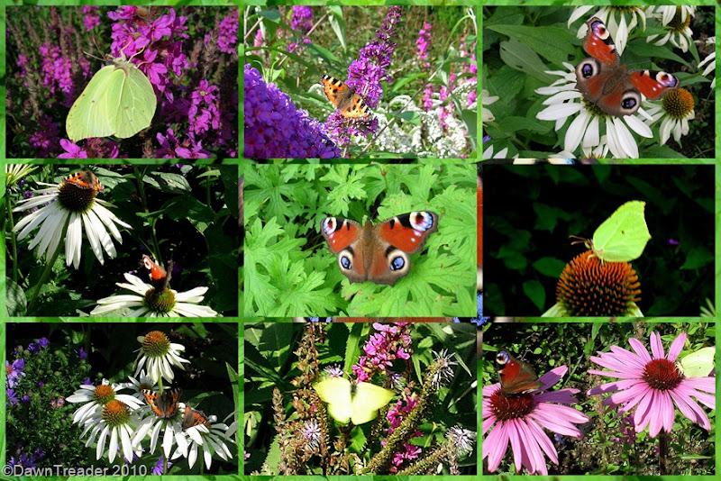 2010-08-21 butterflyx9