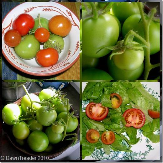 2010-09-141 tomatoes