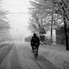 Stubborn by Max Palli - Transportation Bicycles ( ride, bike, black and white, snow, hood )