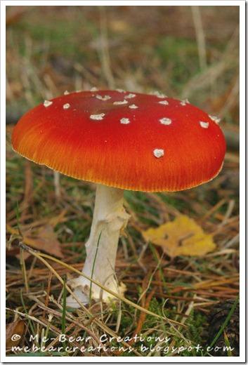 Mushroom_21