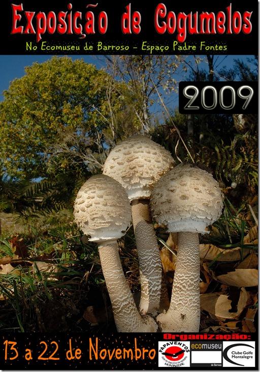 Papaventos-Cogumelos cartaz