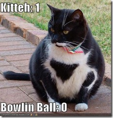 funny-pictures-bowling-ball-cat