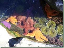 Starfish&Anenomes