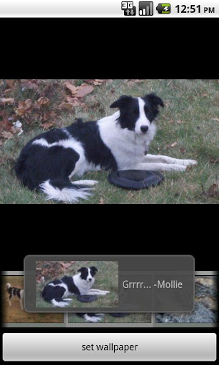 Droid Disk Dogs