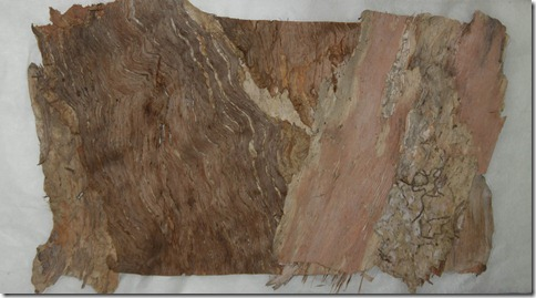 paperbark on japanese tissue