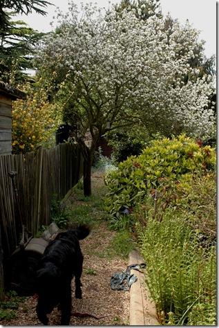 garden 087