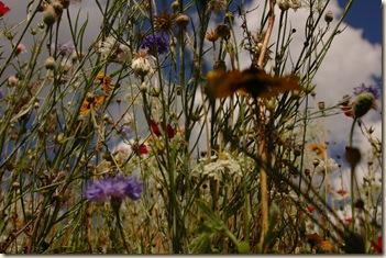 arundel castle garden 010