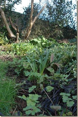 garden a day 048