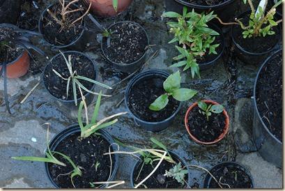 garden a day 152