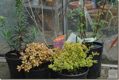 garden a day 193