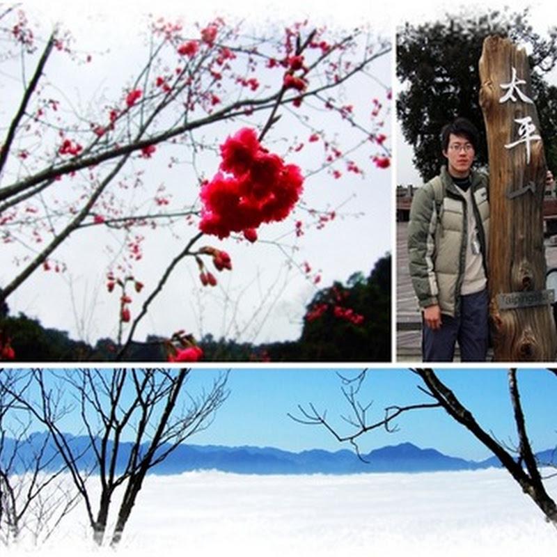 [遊記] 北七宜蘭之旅 Day 2:初訪太平山- 櫻花,見晴雲海,聖稜線