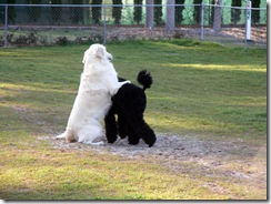 Jackson & Cooper (2)