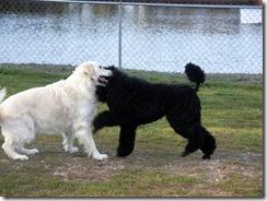 Jackson & Cooper (5)