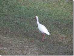 Sanlan Bird3