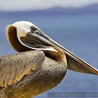 Galapagos by Daniel Petrescu