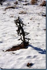 4833-Snow Cactus 1254x1882