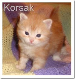 Korsak_20090106_003