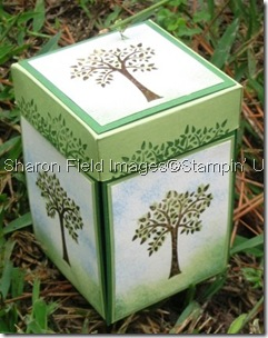 sharon_field_magical3dpopupbox_cbyu