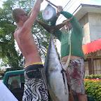 65kg Thunfisch