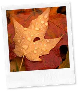 autumn leaves with dew