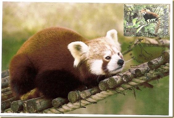 Max. Card -Red Panda
