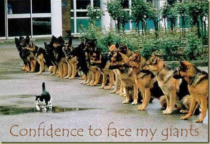 cat having courage-1