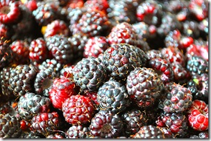 black raspberries-1