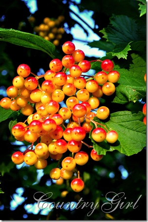 cranberries-2